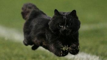 ラグビーの試合に突如乱入!駆け抜けていったネコさんがとっても可愛い!