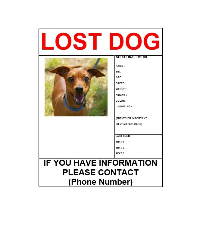 lost dog flyer example - Ozilalmanoof - Lost Dog Flyer Examples