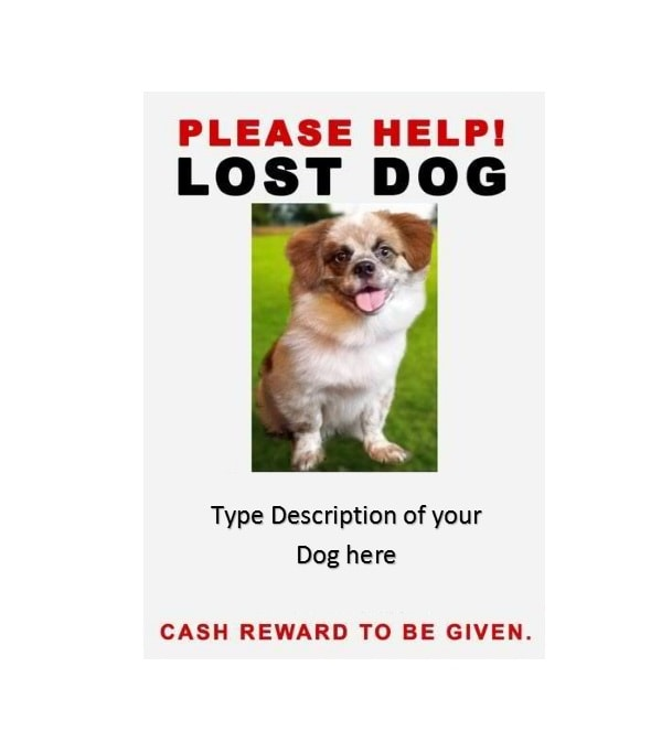 missing pet flyer - Onwebioinnovate