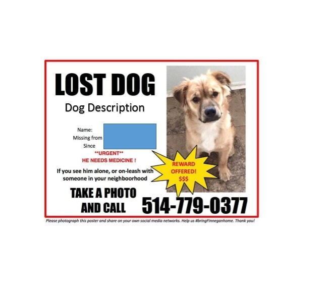 40 Lost Pet Flyers Missing Cat / Dog Poster - Template Archive - missing pet template