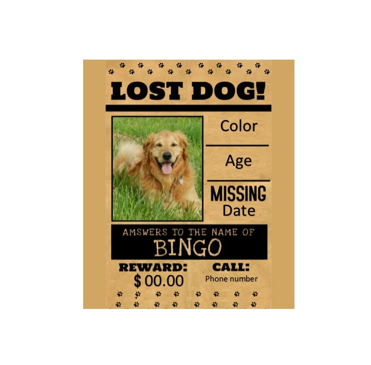 Lost Dog Flyer Template - Design Templates - Lost Dog Flyer Examples