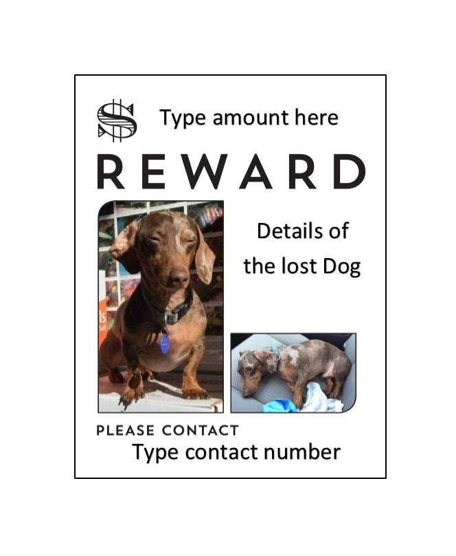 Lost Dog Flyer Template Missing Flyer Template Lost Dog Flyer - lost pet flyer template free