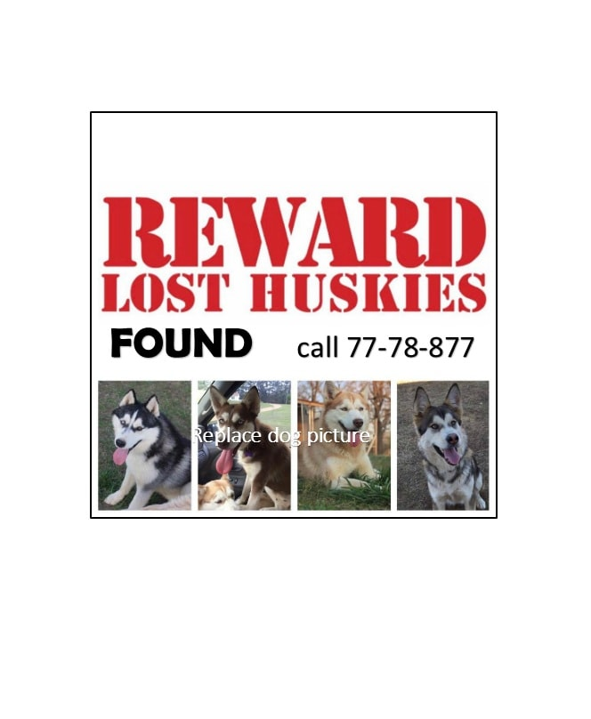 lost dog flyers - Towerdlugopisyreklamowe