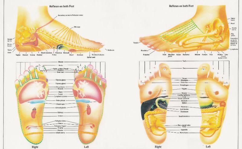 31 Printable Foot Reflexology Charts  Maps - Template Lab