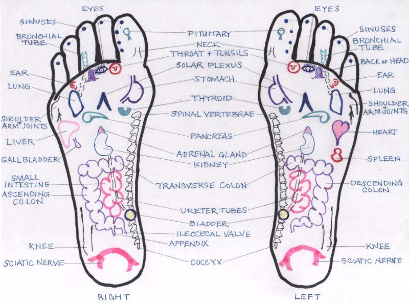 31 Printable Foot Reflexology Charts  Maps ᐅ Template Lab