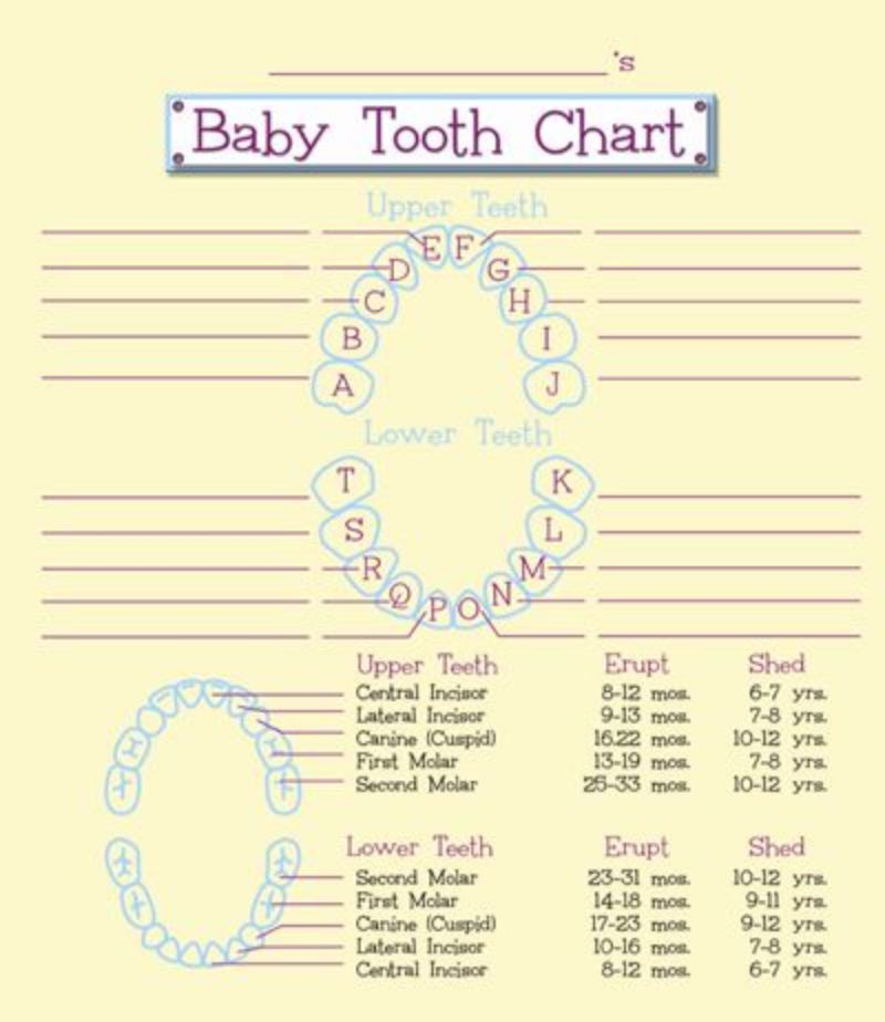 38 Printable Baby Teeth Charts  Timelines ᐅ Template Lab