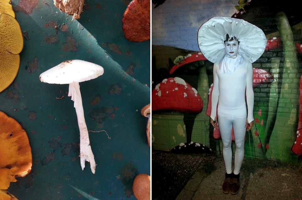 left: Amanita bisporigera (commonly known as the Destroying Angel). right: Destroying Angel costume, Halloween 2014.