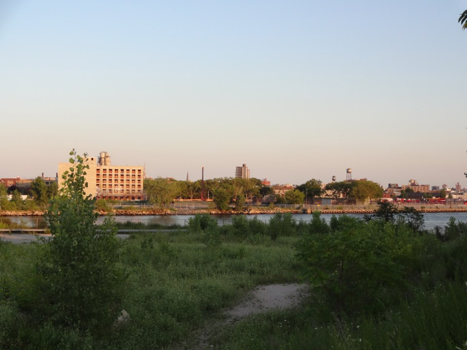 Interspecies grassland, facing the Newtown Creek, July 2015
