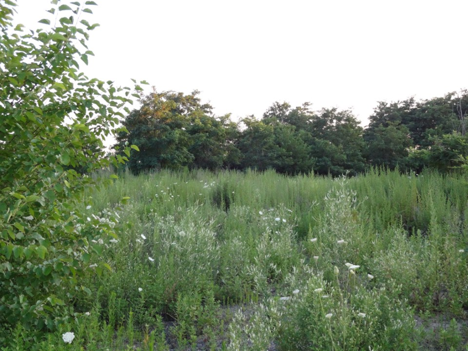 Wild meadow, June 2015
