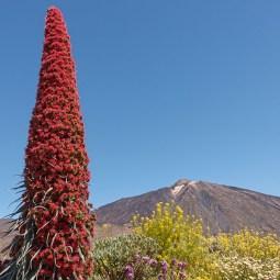 Volcanic.landscapes1