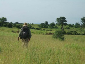 In Ruaha National Park, Clinton Epps collected dung samples from a herd of grazing elands. (Photo courtesy of Clinton Epps)