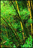 Akaka Falls Wallpaper Bamboo Pictures Stock Photos And Fine Art Prints