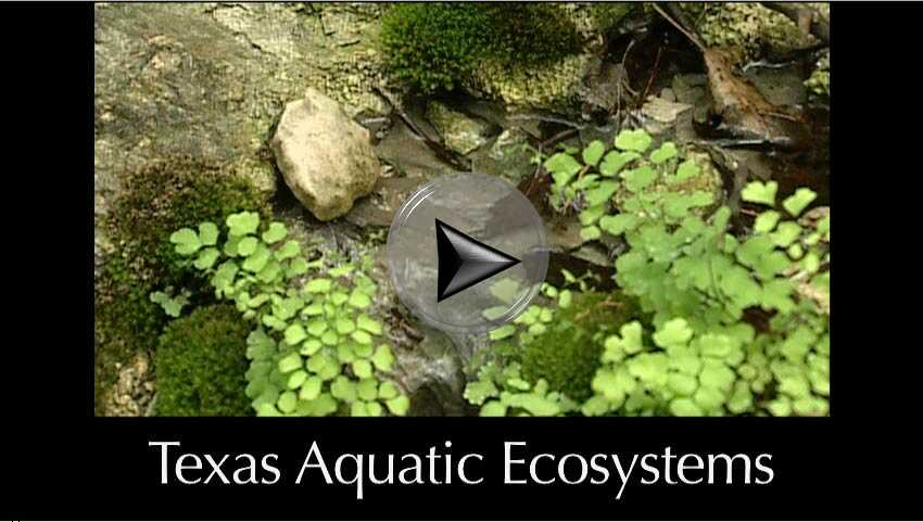 Texas Aquatic Ecosystems \u2013 Chapter 6 Texas Aquatic Science