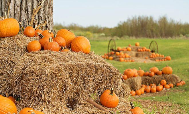 Pumpkins Fall Wallpaper 5 Fall Fun Pumpkin Patches Festivals Corn Mazes Amp More