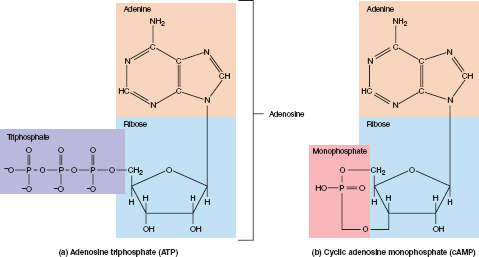 Best 25+ Nitrogenous base ideas on Pinterest Recipes with fruit - use case diagram template