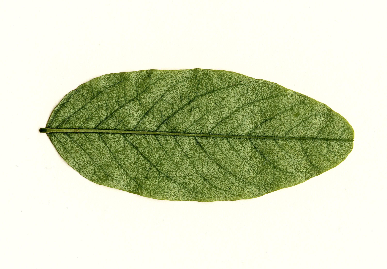 Black Vintage Wallpaper 9 Leaf Textures Texture Fabrik