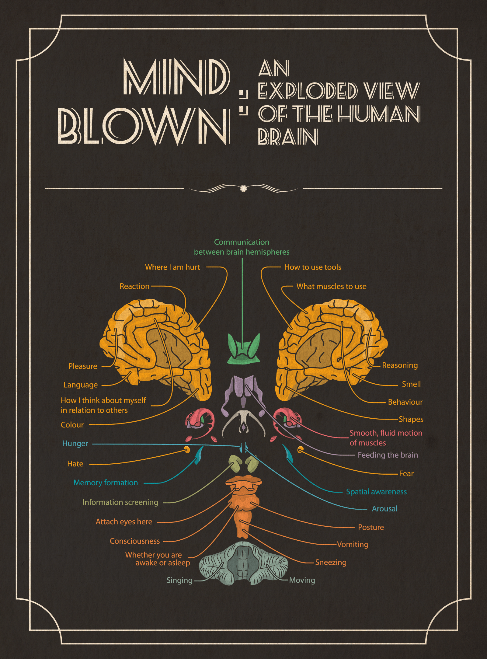 mind blown an exploded view of the human brain