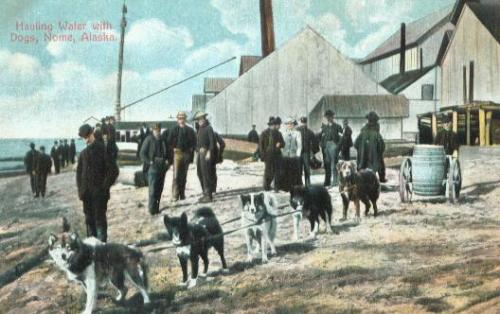 Dogs hauling water, Nome, Alaska, 1899. This image was found online at www.arcticwebsite.com/