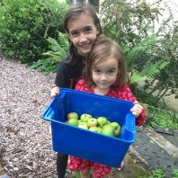 Apples from our garden.