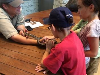 Petting a snake.