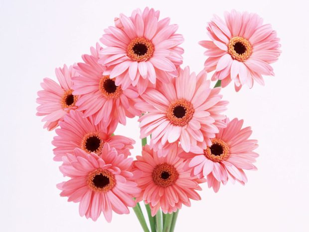 Flower-Images-37