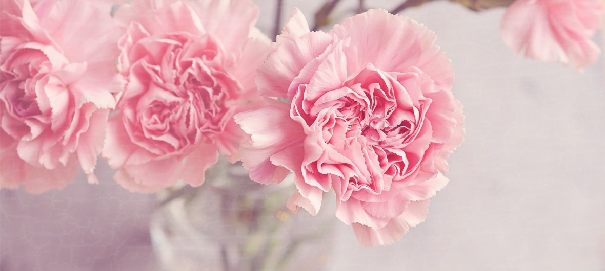 light_pink_carnations_flowers_in_a_vase-wallpaper-1920x1080