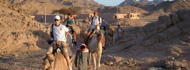 Сафари на верблюдах в Египте