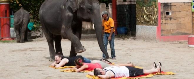 зоопарк на Пхукете - слони