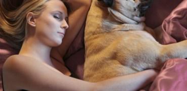 Cuidados para dividir a cama com seu animal de estimação