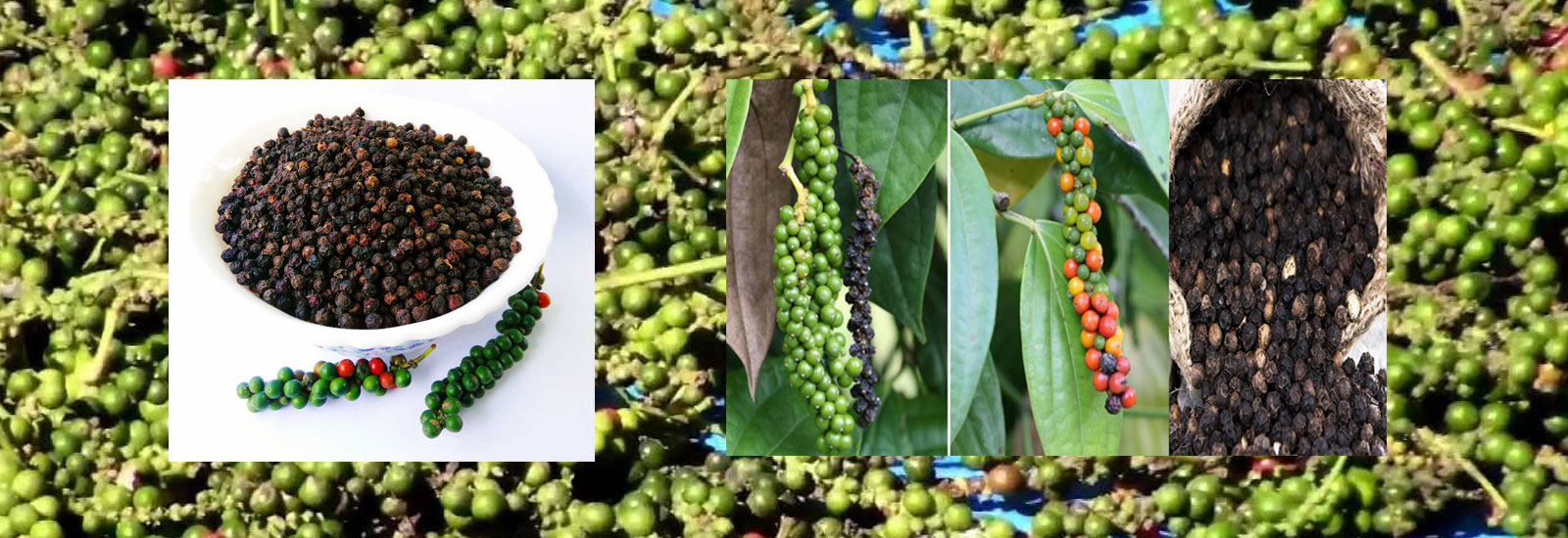 Wholesale Distributors In Chennai Thangam Trading Company Black Pepper Dealers Chennai