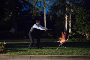 Everyone needs some Jarvis chasing a flamingo in their life. / Courtesy ABC