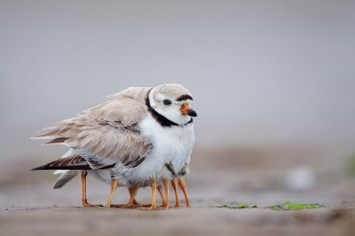 0512-plover-family-massachusetts-714