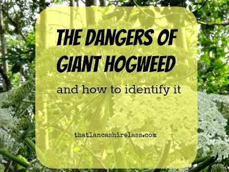 Giant Hogweed title