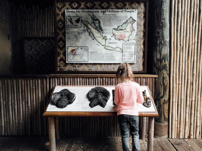 gorilla exhibit