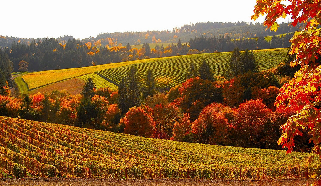 Vermont Wallpaper Fall 8 Stunning Photos Of Oregon S Fall Foliage That Oregon Life