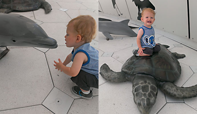 Kissing Dolphins and Riding Turtles
