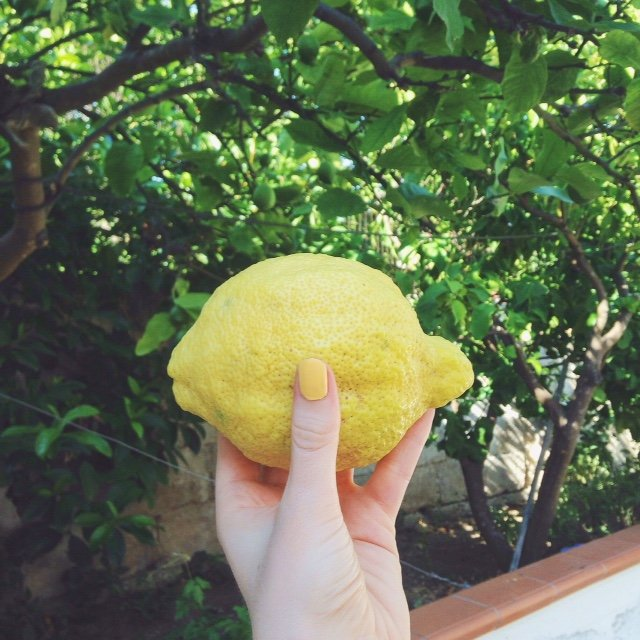 Giant lemons from the backgarden