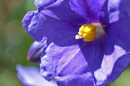 Extreme closeup of Purple Flower