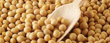Soya-protien  - Heart Healthy Diet