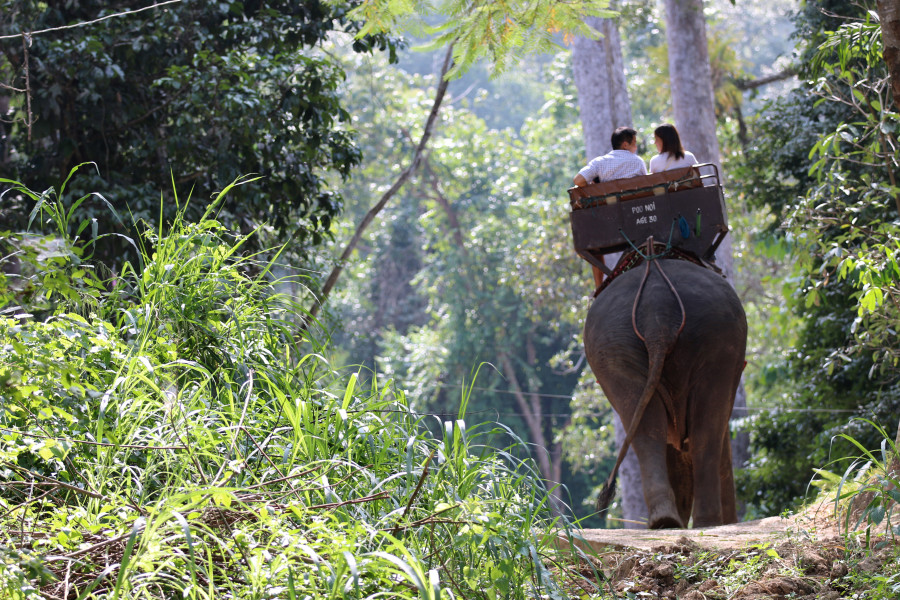 Tourists take a ride on an elephant in Thailand. World Animal Protection launched a campaign to urge tourists to act responsibly on holiday, where local wildlife can be exploited for entertainment.