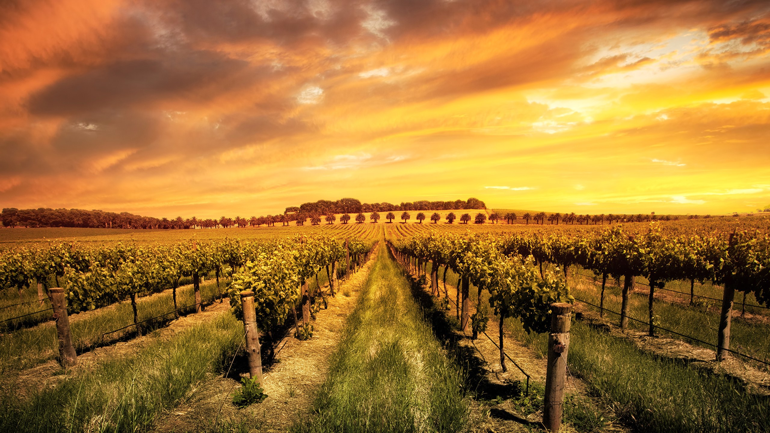 Wine Prices Australia Why Australia Needs To Get Us All To Pay A Bit More For