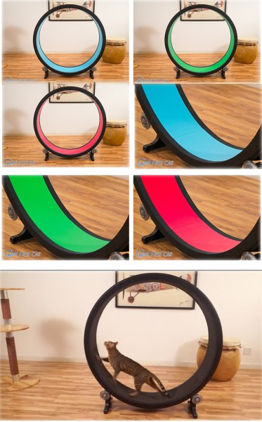 one-fast-cat-exercise-wheel-1