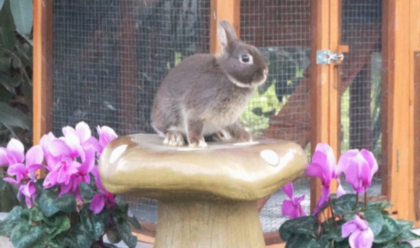 My Book on Rabbits
