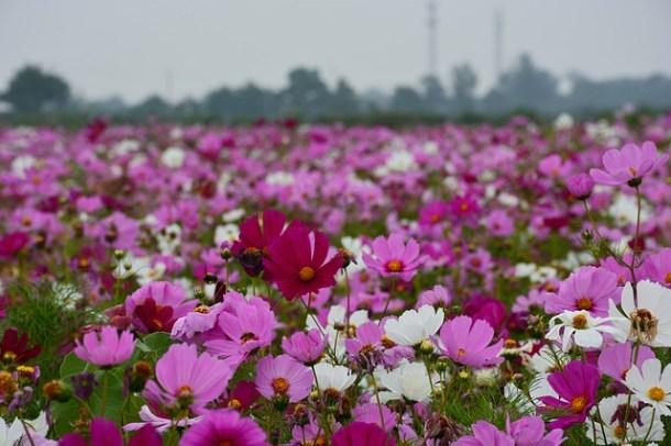 flower-825296_640