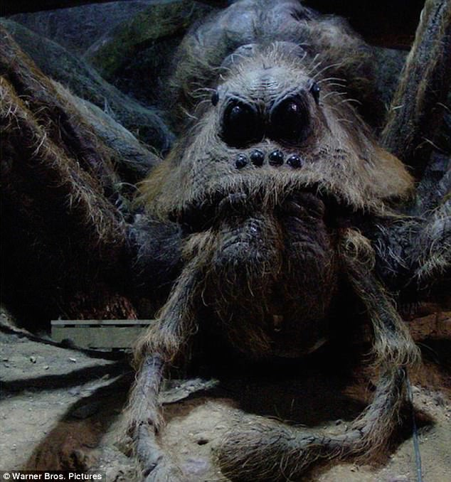 Body Mist A New Spider Species Is Named After Aragog! - The-leaky