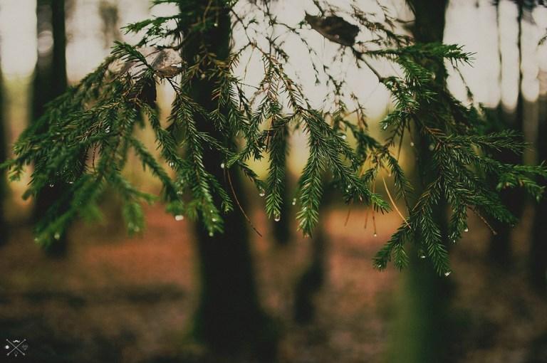 Осенний лес Дмитрия Адаменко + 5 песен
