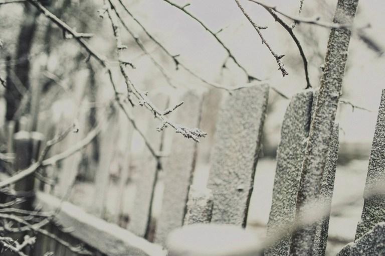 Добро пожаловать: первый снег