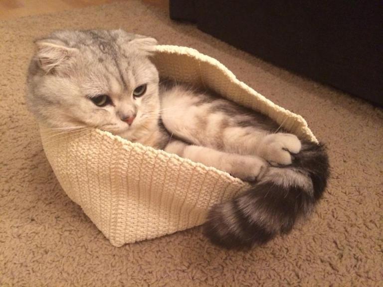 Большое счастье: кот Луи
