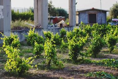 Страна оливковых рощ: Греция Татьяны Сущеня