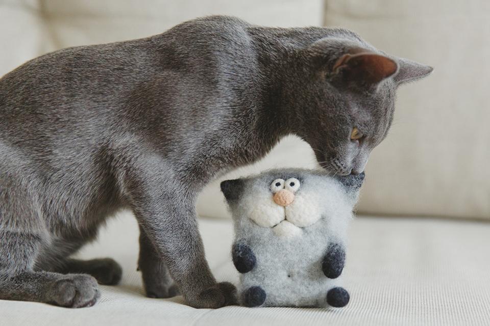 Русская голубая серый кот Хамон (1)